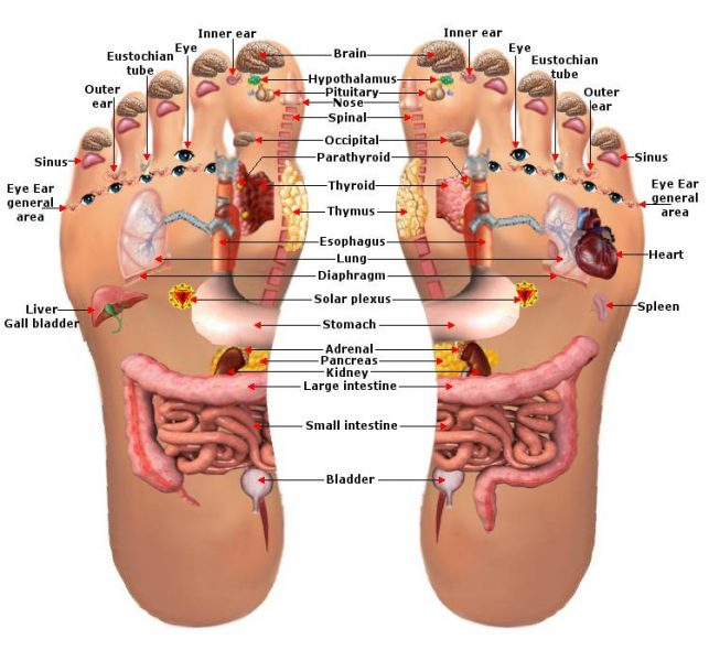 FOOT REFLEXOLOGY CERTIFICATION COURSE - part 3 @ Herb Shop * Healing Center | Canton | Georgia | United States